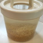 KAMOSICOで玄米を発芽させてみよう!