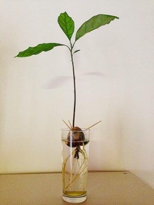 種から芽が出た