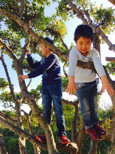 木登りをするせんちゃん、そうちゃん
