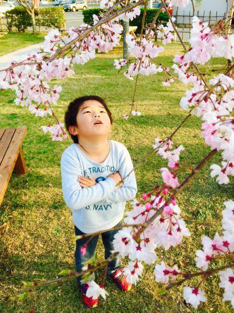 桜を見つめるそうちゃん