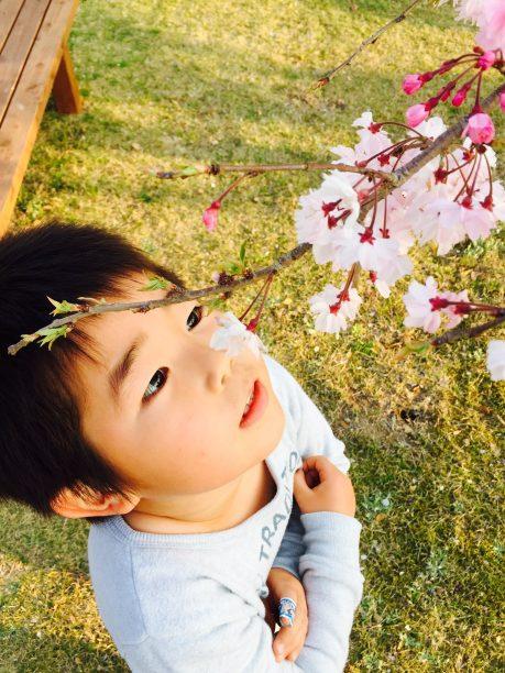 桜を見つめるせんちゃん