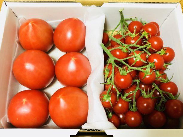 桃太郎トマトとミニトマト