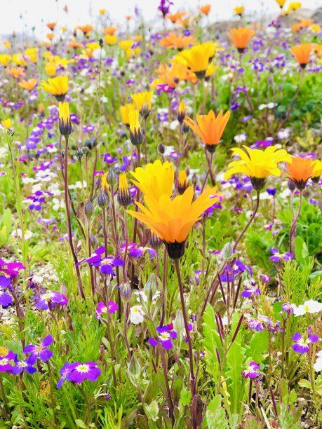 公園の小花