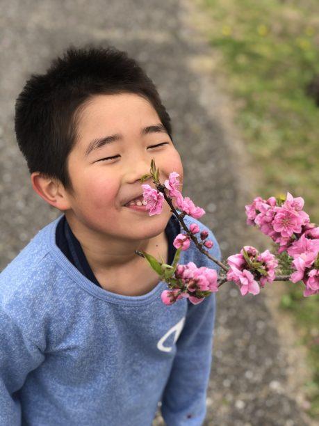 お花の匂いを嗅ぐせんちゃん