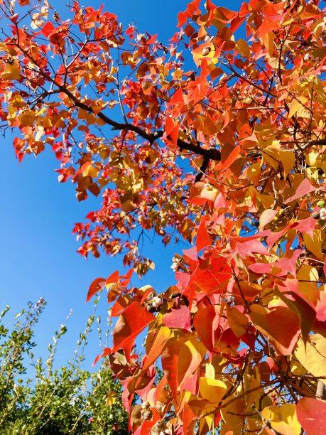 【レシピ:甘麹】「甘麹で作る栗きんとん」栗のホクホクっとした食感と甘麹のほんのり優しい甘さが、口いっぱいに秋を感じます‼