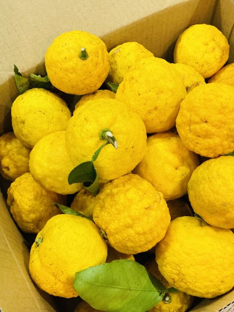 【レシピ:ジャム】ヨーグルティアを使って「柚子ジャム」柚子の皮はなんとレモン果汁の4倍も含まれているんです‼️